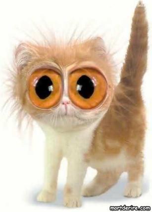 chat-qui-fait-les-gros-yeux