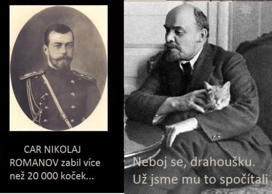 car a kočky
